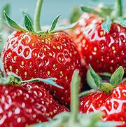 草莓亚虎pt网站方案